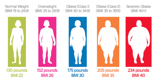 Obesity Categories