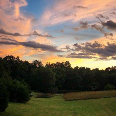 Blue Dog Sunset