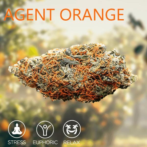 Agent Orange strain