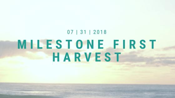https://secureservercdn.net/184.168.47.225/c74.138.myftpupload.com/wp-content/uploads/2019/04/Milestone-first-harvest.png?time=1563406879