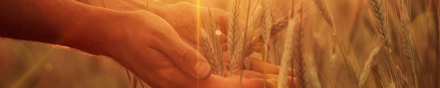 Seeds of Hope Granting