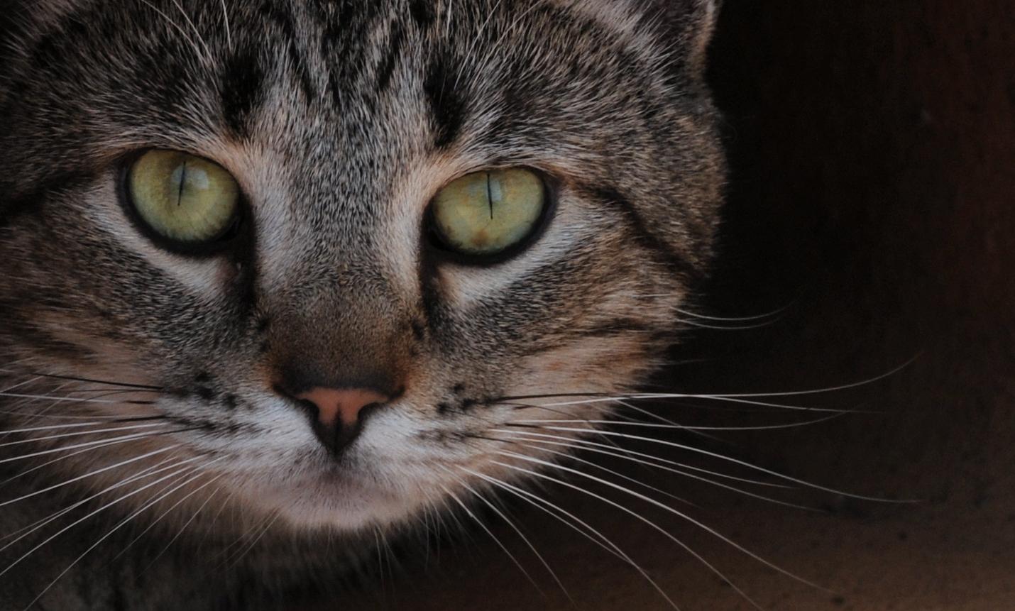 IrishGuy Gary Crossey Asheville Photography Journal - Cat headshot.
