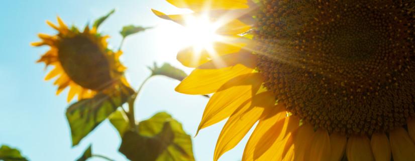 I See a Solar Sunrise