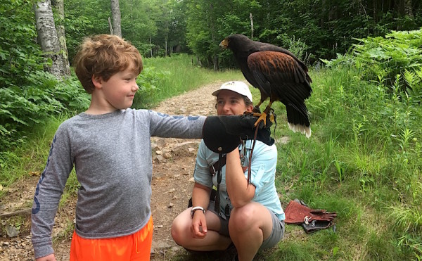 Apprentice Falconeer Tremblant