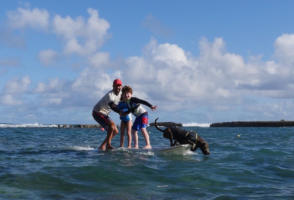SurfingwithDogs