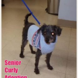Senior Curly — Happy Days Ahead!