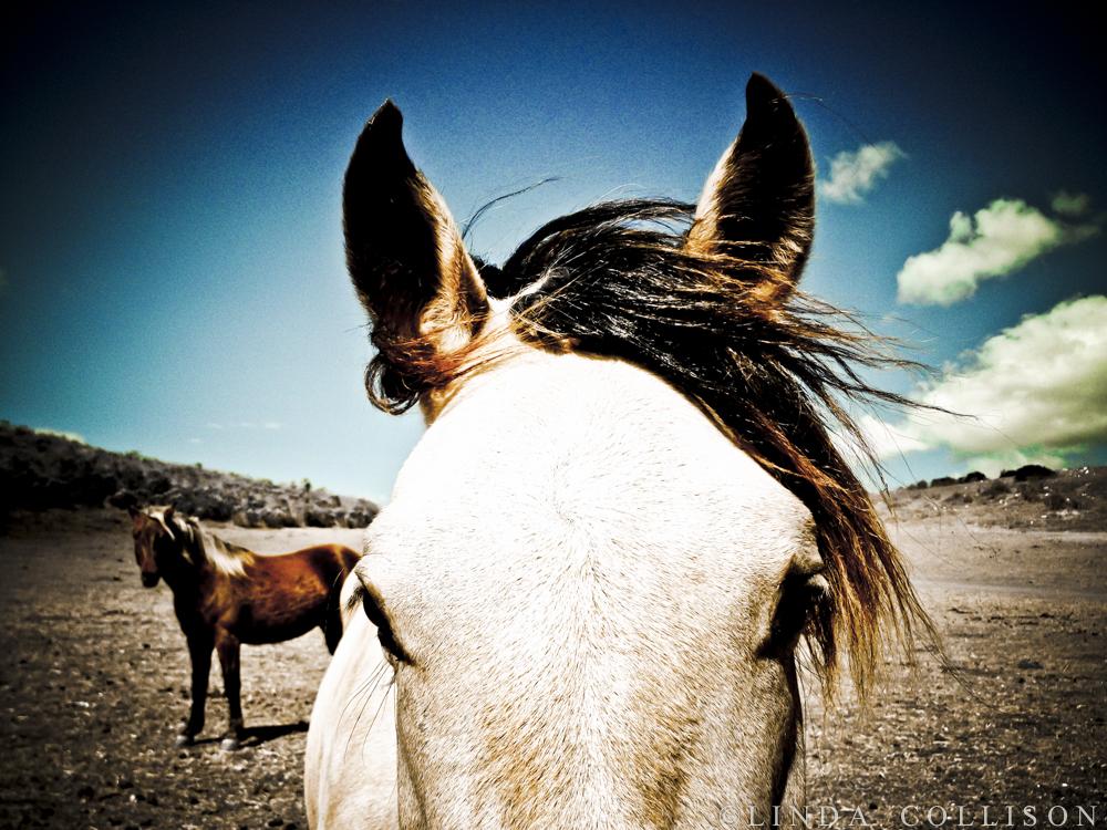 3 Cloud Horse