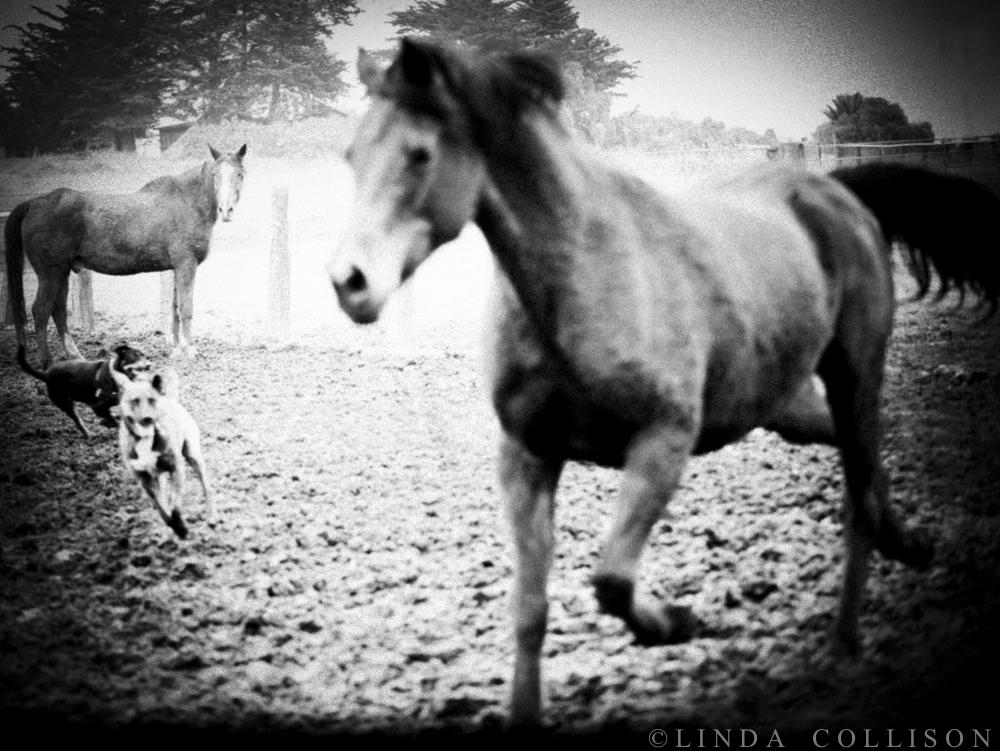 Dog & Horse Dream