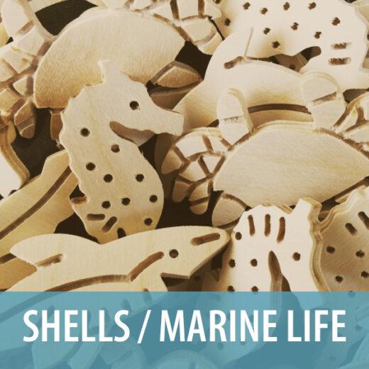 Shells / Marine Life