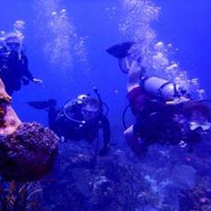 Braveheart - Diving