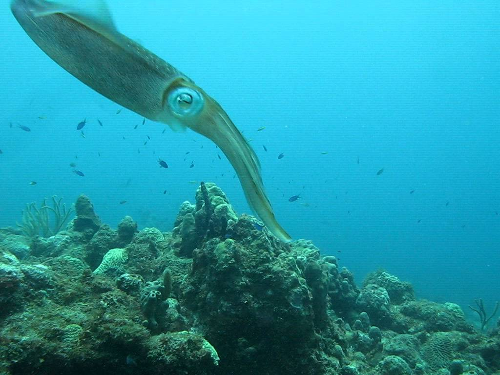 Top Diving Locations in St. Croix