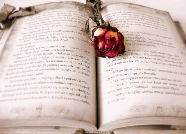 A story book open with a rose in it
