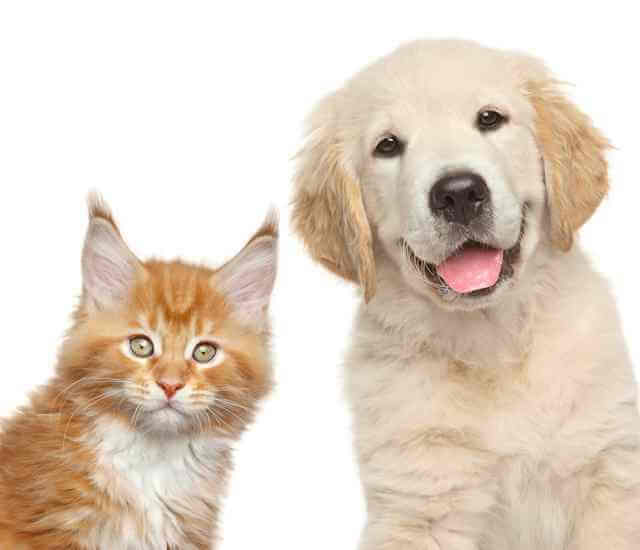 """Picture of cat and golden retriever staring back at viewer, in a kind of stupid way. Healthcare Reform Part II? Are you kidding me? What kind of house pet is one for thinking that a political """"re-do"""" will this time """"work."""""""