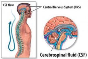 CranioSacral Therapy San Luis Obispo | Greta Hilde
