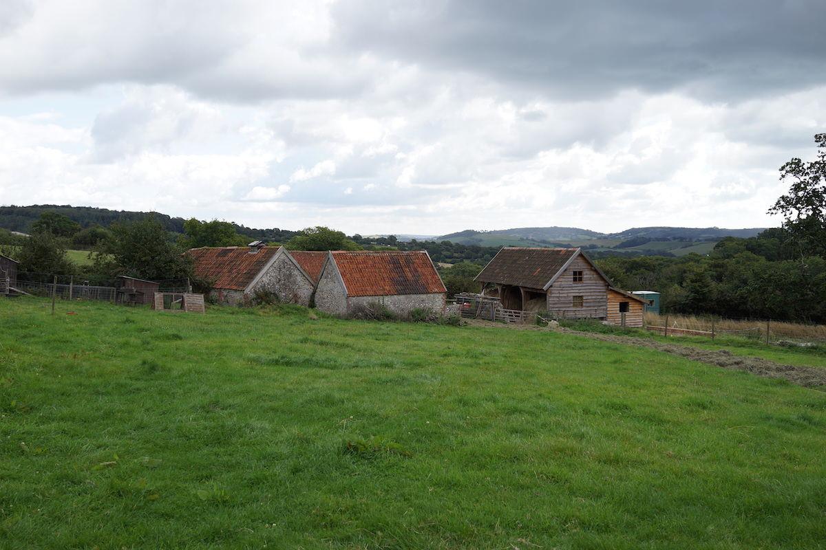 An Organic Farm in Dorset