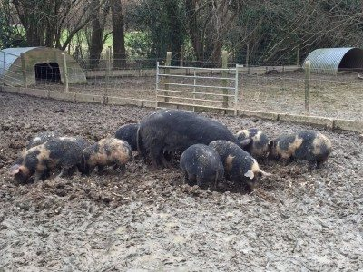 Mumma Pig and her youngsters