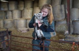 Lambing help needed