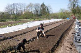 market gardening course