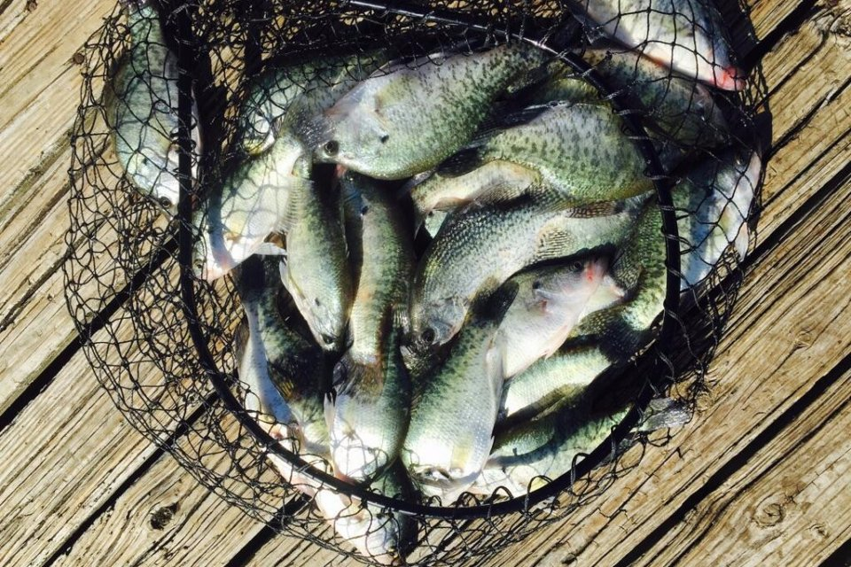 Lake Lewisville Crappie Guide – Crappie Fishing
