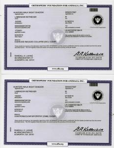 Shadows OFA-DNA Certifications