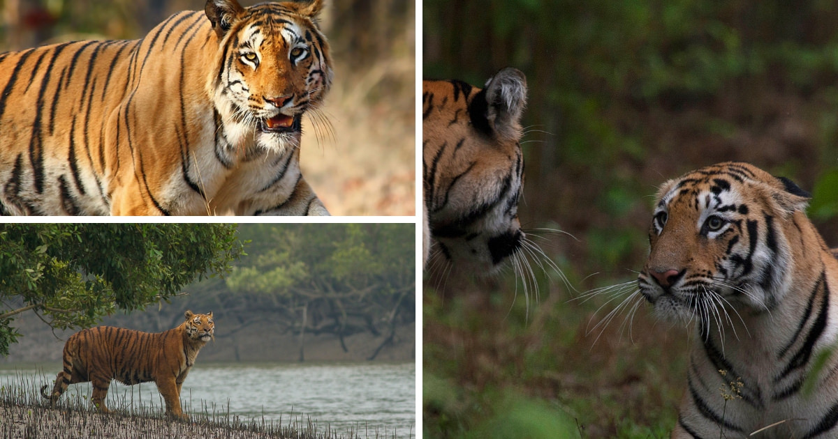 Tiger Reserves in India list