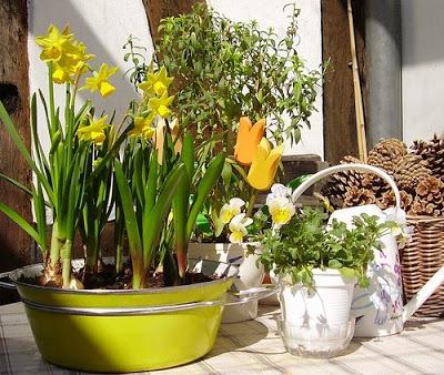 spring on Nicola's terrace garden