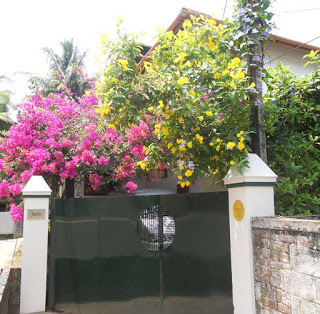 exterior front gate bougainvilea