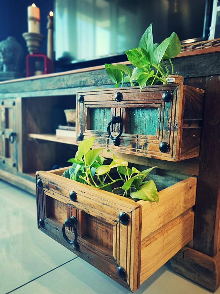 Home style Tour with Rajni in Hyderabad: the drawer was converted into planter