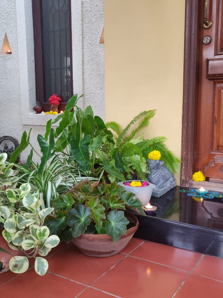 the green plants at the corner of front door entryway