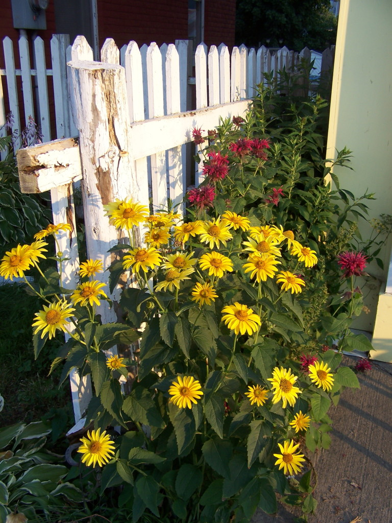 Cobden flowers