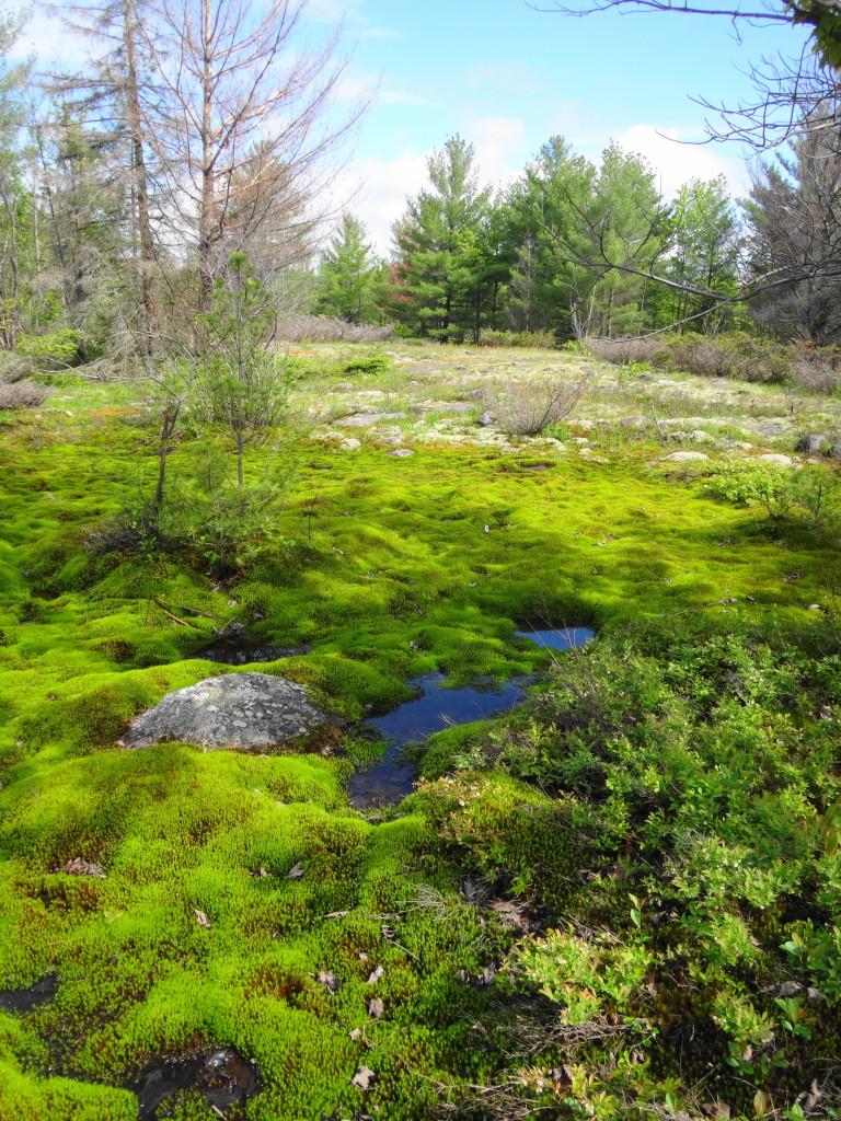 Moss and Lichen Carpet