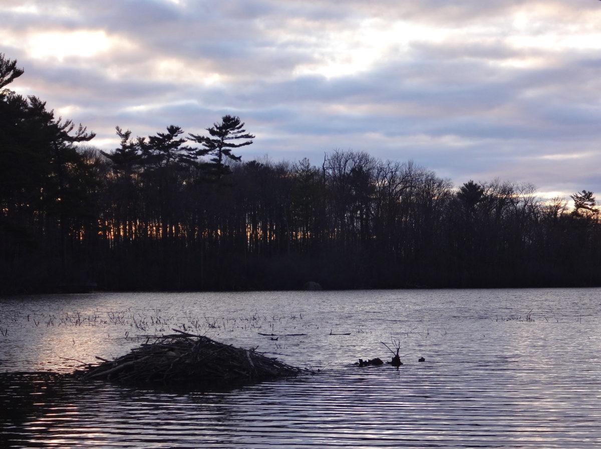 Mud Lake, Britannia