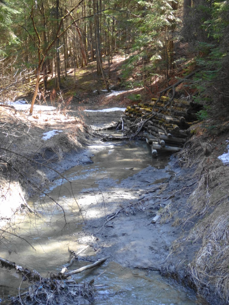 A protective crib wall protects a small section of bank along Bilberry Creek.