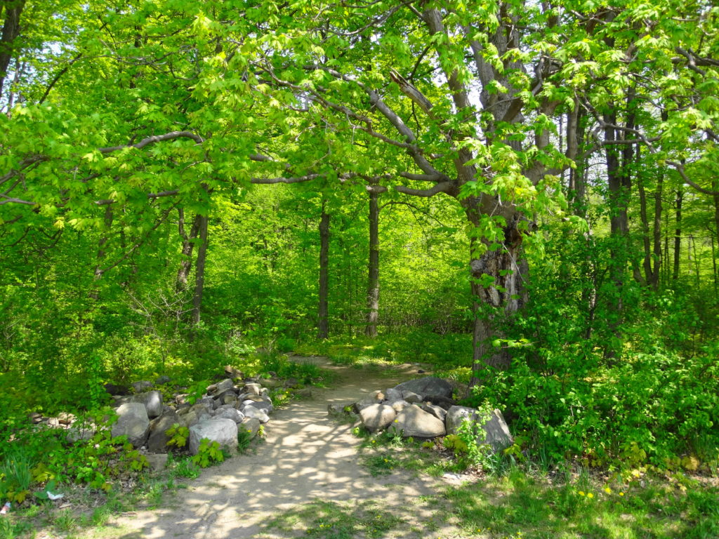A path crosses a tumbled wall of old boulders, through a frame of trees, into the Chapman Mills Woodlot.