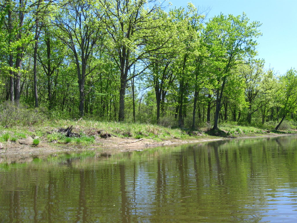 A stand of bur oak trees lines a sandy bank along Constance Creek.