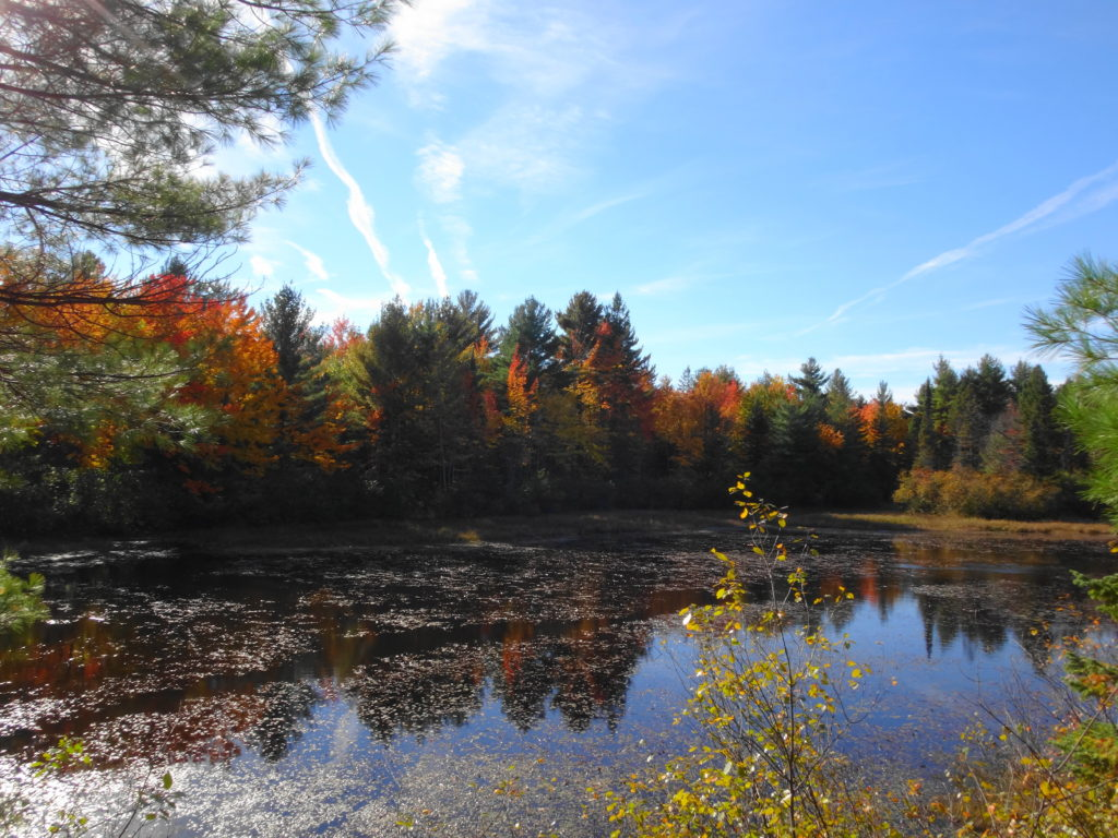 Red and gold autumn foliage shines amid dark conifer trees on the far side a large beaverpond.