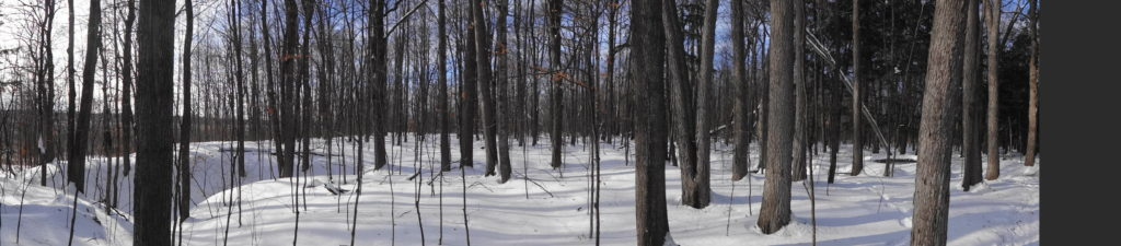 A blanket of snow covers the floor of a mature deciduous forest.