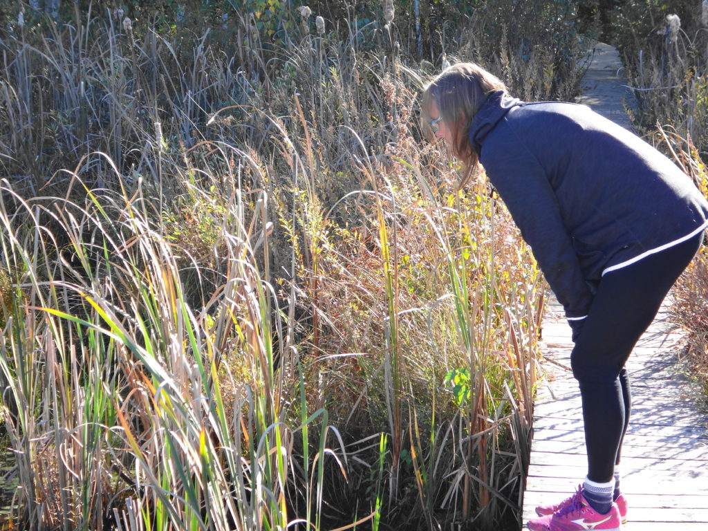 A woman leans over to admire the wetland from the boardwalk.