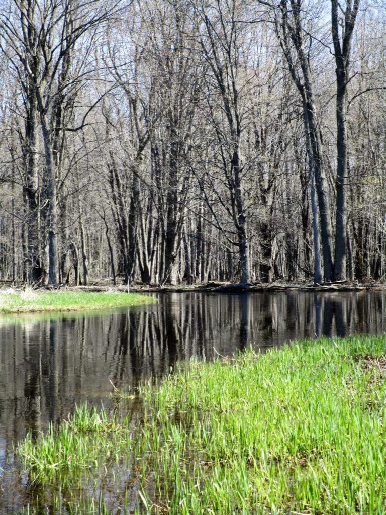 The Jock River meanders between marsh meadow in the Richmond Fen Swamp.