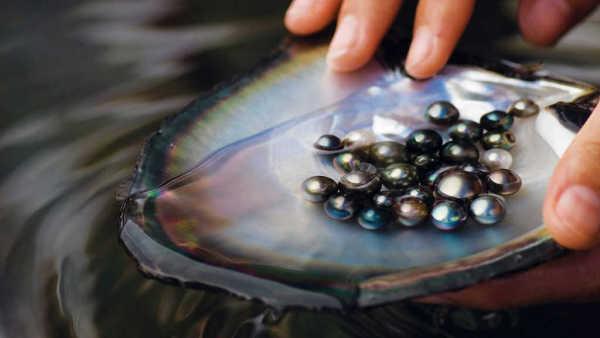 pearl hunting