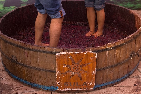 Grape stomping at Sula Fest
