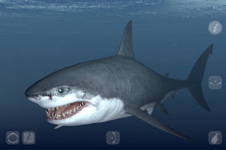 Talking Great White: My Pet Shark