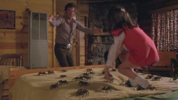 kingdom of spiders 1977