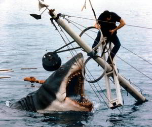 15 best shark movies of all time