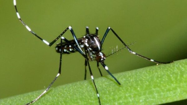 mosquito the deadliest creature in the world