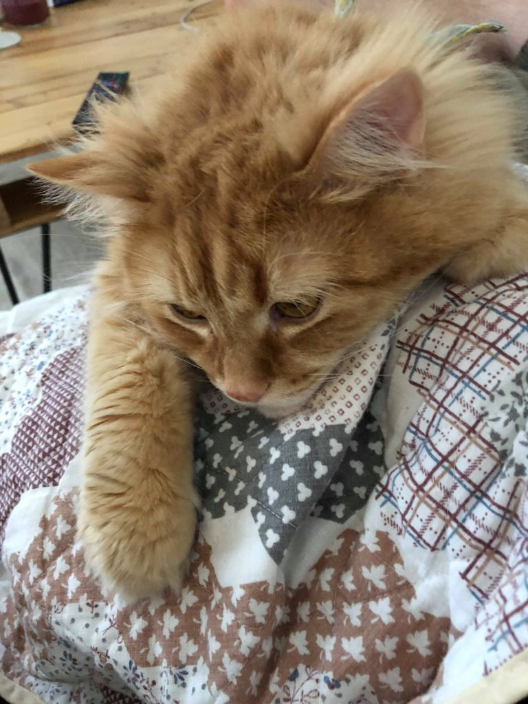 cat wanting hugs