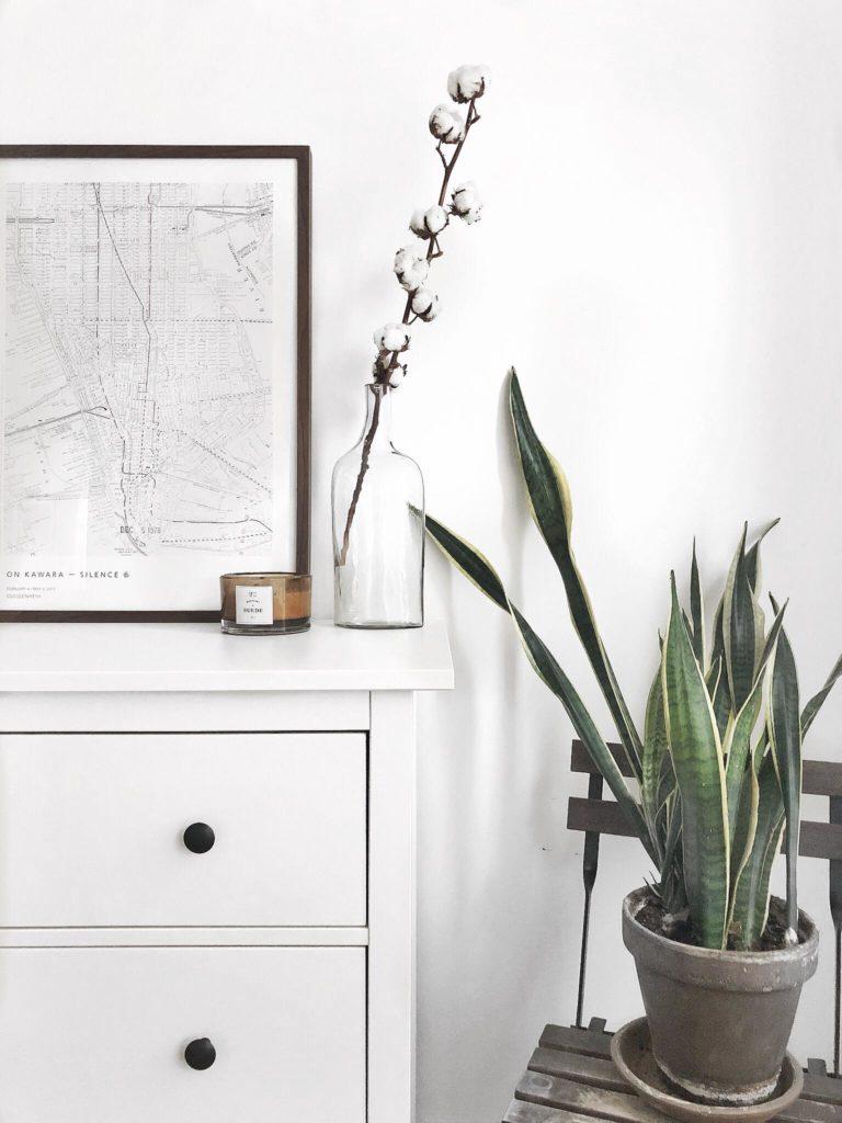 home deocr, plants, home, bedroom decoration