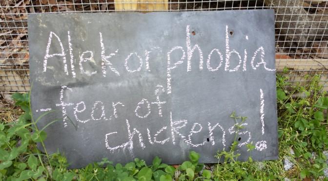 Alektorophobia is fear of chickens