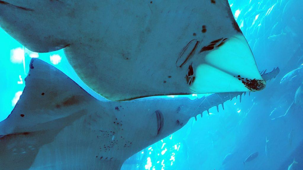 Tubarões no aquário de Dubai