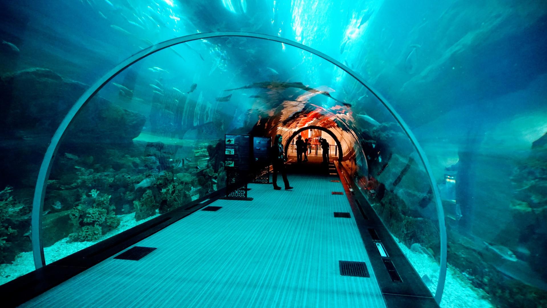 túnel dentro do aquário de Dubai